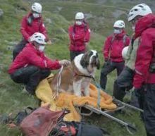 Saint Bernard Dog Rescued on England's Highest Mountain