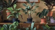Plant lover takes beautiful timelapse videos of her indoor garden