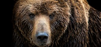 Man who endured weeklong attacks by grizzly rescued