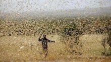 Le Kenya se prépare à un retour massif des criquets pèlerins