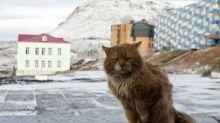 北極圈小群島上全島禁貓 但竟然有貓星人成功入侵?