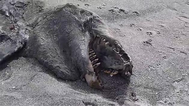 RAW: Mystery creature washes ashore