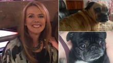 Police investigate dog walker after pet pooches go missing