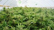 Better Marijuana Stock: Scotts Miracle-Gro vs. Auxly Cannabis