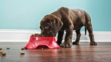 Prime Day 2020: Premium-Hundefutter von Josera im Angebot
