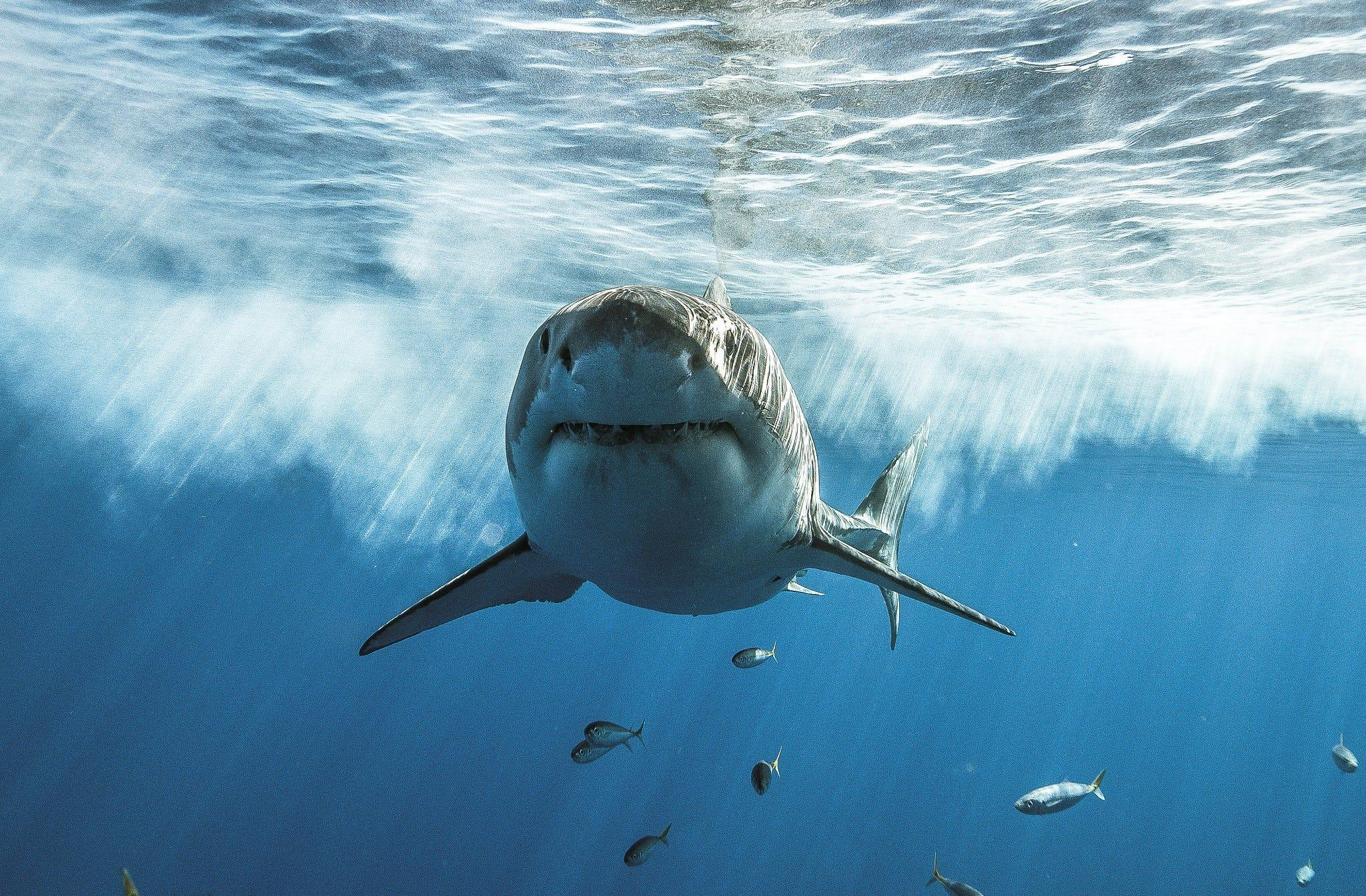 Shark attacks: How to avoid them and whether shark repellents really work