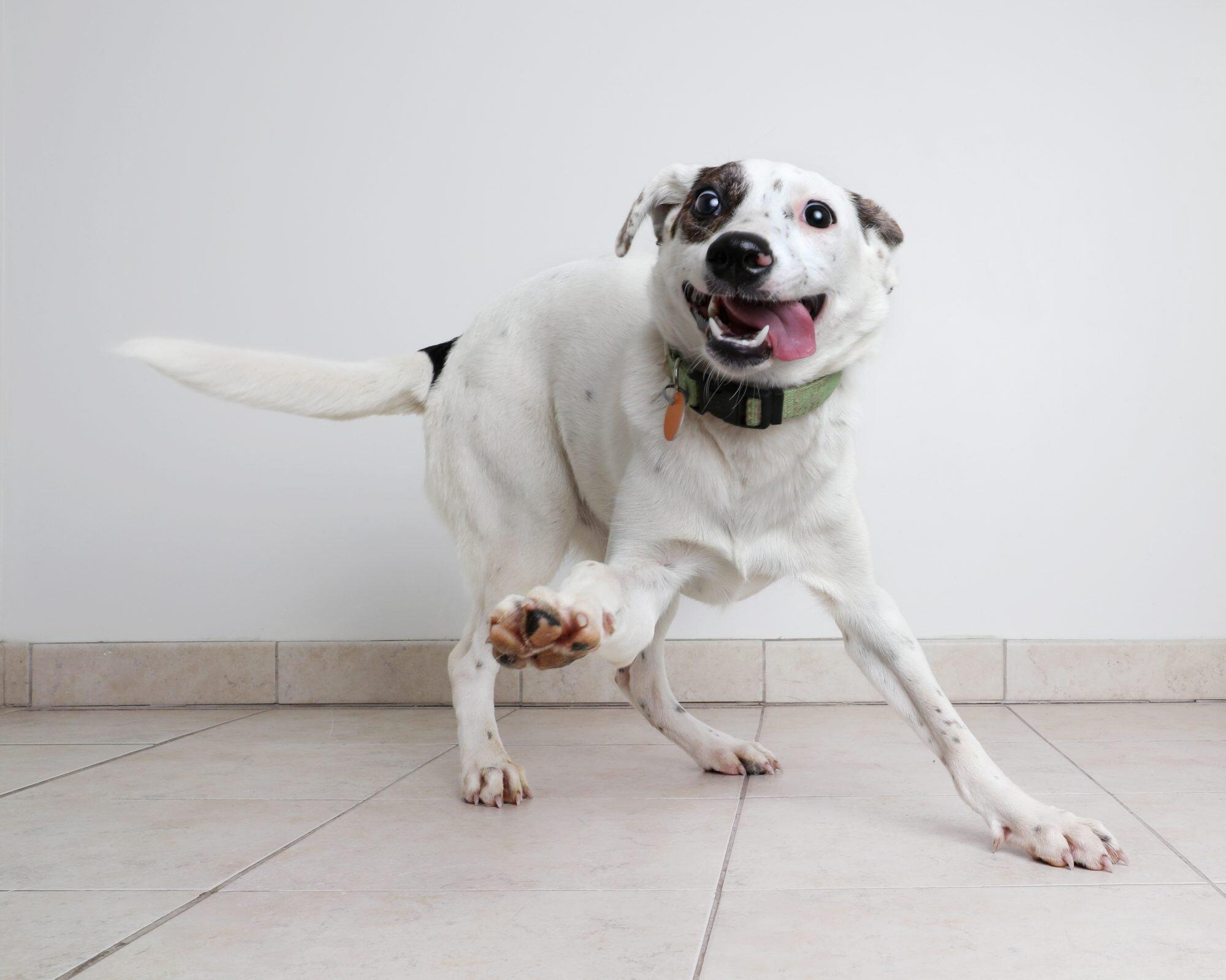 Dog Zoomies: What Are They, and Why Do They Happen?
