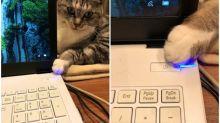 日本喵星人阻止辦工 星期日出手熄電腦