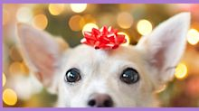 7 things to consider before giving a pet as a holiday gift