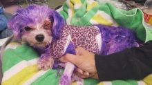 This Dog Barely Survived Injuries from Hair Dye