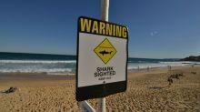 Austrália mata quatro tubarões após ataques a turistas