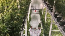 Université de Moncton partners with the Government of Canada, Genome Atlantic, Genome Canada, New Brunswick Innovation Foundation, and Organigram to advance cannabis research and increase productivity