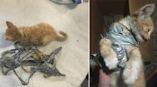 'Appalling': RSPCA 'shocked' to find firecracker taped to tiny kitten