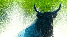'This bull market has been fueled by 3 things,' investment advisor says