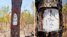 Aussies stumped by mysterious codes carved into trees