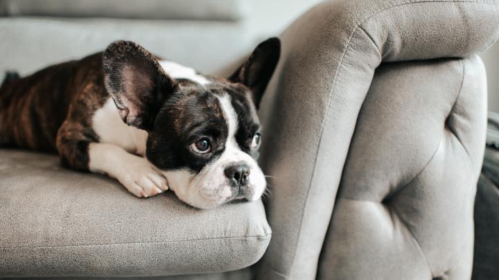 Hund allein zuhaus? Die Furbo Hundekamera lässt dich trotzdem bei ihm sein - und ist jetzt um fast die Hälfte reduziert