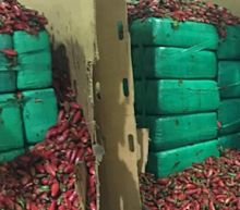 Customs agents found nearly 4 tons of marijuana hidden in a shipment of jalapeños trying to enter the US
