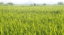 Vietnamese farmers are migrating en masse to escape climate change