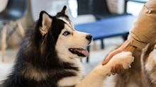 3 recent discoveries have upended scientists' understanding of how dogs age, navigate, and perceive human speech