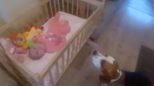 Vídeo de cachorro fazendo bebê dormir está conquistando a internet