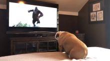 Buldogue tem a melhor reação ao assistir King Kong