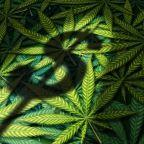 3 Big-Name Marijuana Stocks With Plunging Profit Projections