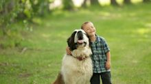 17 Loyal Dog Breeds That'll Never Leave Your Side