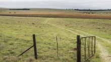 Too Early to Panic on S. Africa Land, SARB Official Says