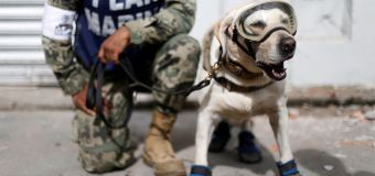 Hero dogs help save Mexico quake survivors