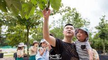【苗圃公園】免費樹木導賞及工作坊