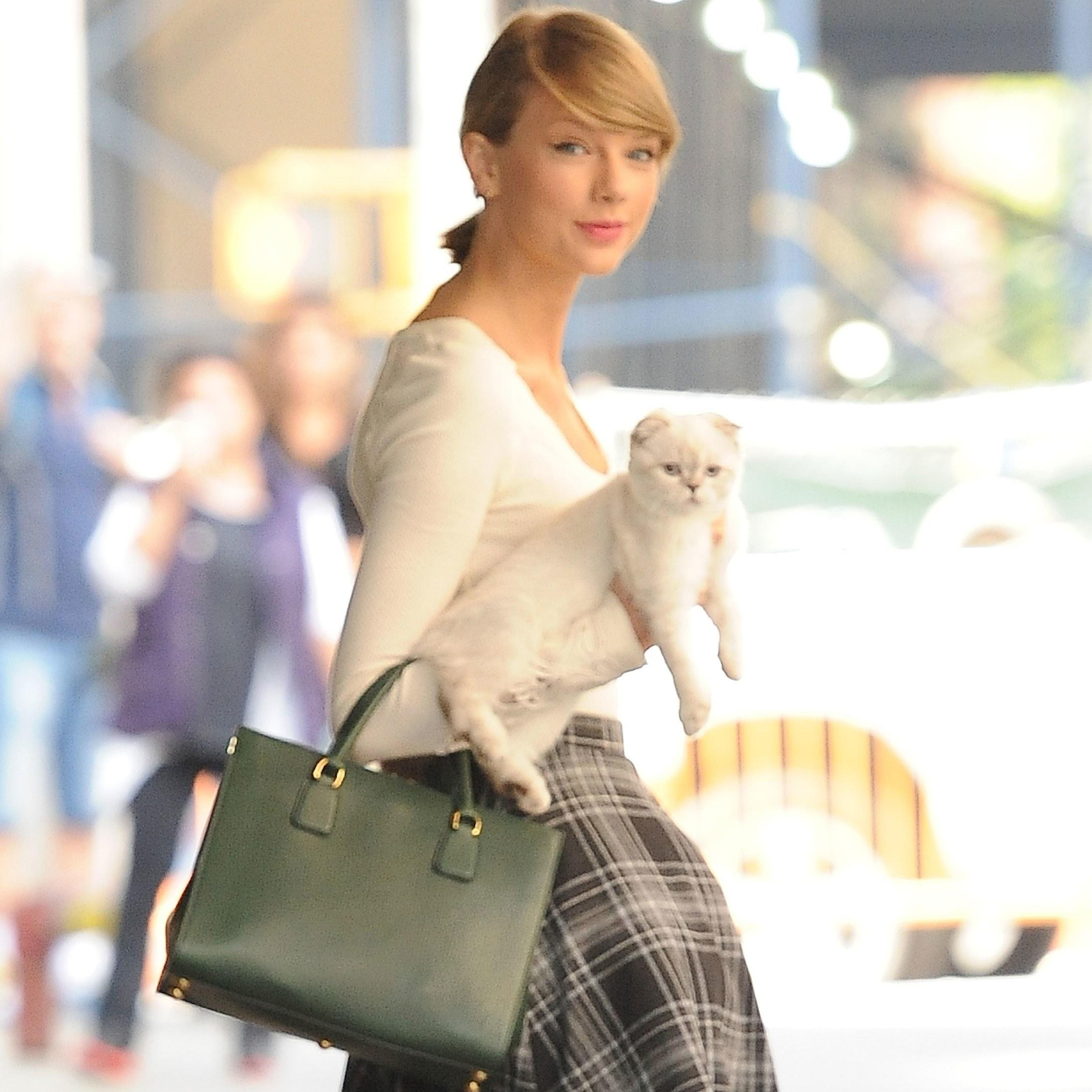 die taylor swifts cat - 570×777