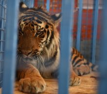 Animals evacuated to Turkey from 'neglected' Syria zoo