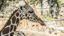 Exclusive: San Antonio Zoo's economic impact roars past $100M