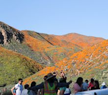 Poppy fields in Lake Elsinore, California, shut down to public amid Super Bloom apocalypse
