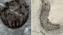 'Treasure trove' of new animal species discovered at 500m-year-old fossil site in China