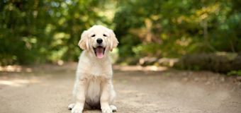3 things I've bought my dog we now can't live without