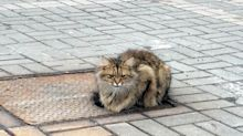 Abandoned Cat Sits In The Same Spot Every Day, Waiting Patiently For Its Family To Come Back