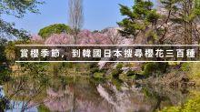 賞櫻季節,到韓國日本搜尋櫻花三百種!