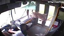 Deer takes unexpected trip on bus