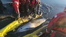 Firefighters rescue two dolphins from Thames Estuary after they got stuck in muddy waters