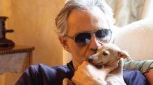 """Bocelli, appello per il cane: """"Aiutateci a trovare Pallina"""""""