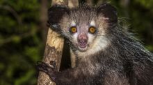 5 animales que -probablemente- no sabías que existían