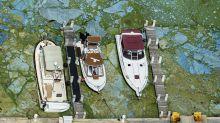 (FOTOS) La invasión de algas malolientes y tóxicas que amenaza las aguas de EEUU