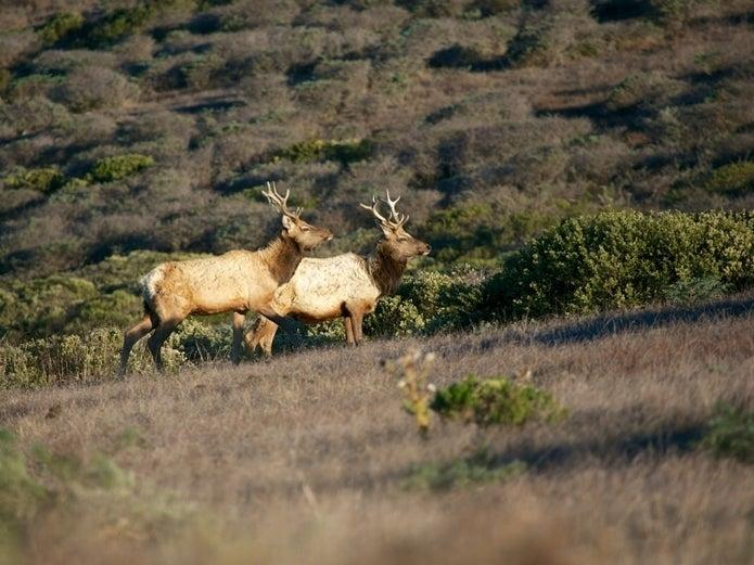 A 250-page environmental impact report describes proposed plans for 28,000 acres of public land in Marin County.
