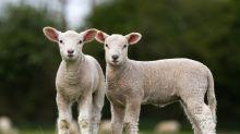 'The silver lining to coronavirus lockdown? Animals are enjoying a respite from human tyranny'