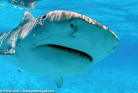 Texas Just Banned Sales of Shark Fin, Will Other States Follow?