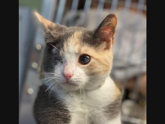 While the coronavirus has put a pause on many aspects of life on Long Island, animal shelters are still looking to find forever homes for dogs and cats.