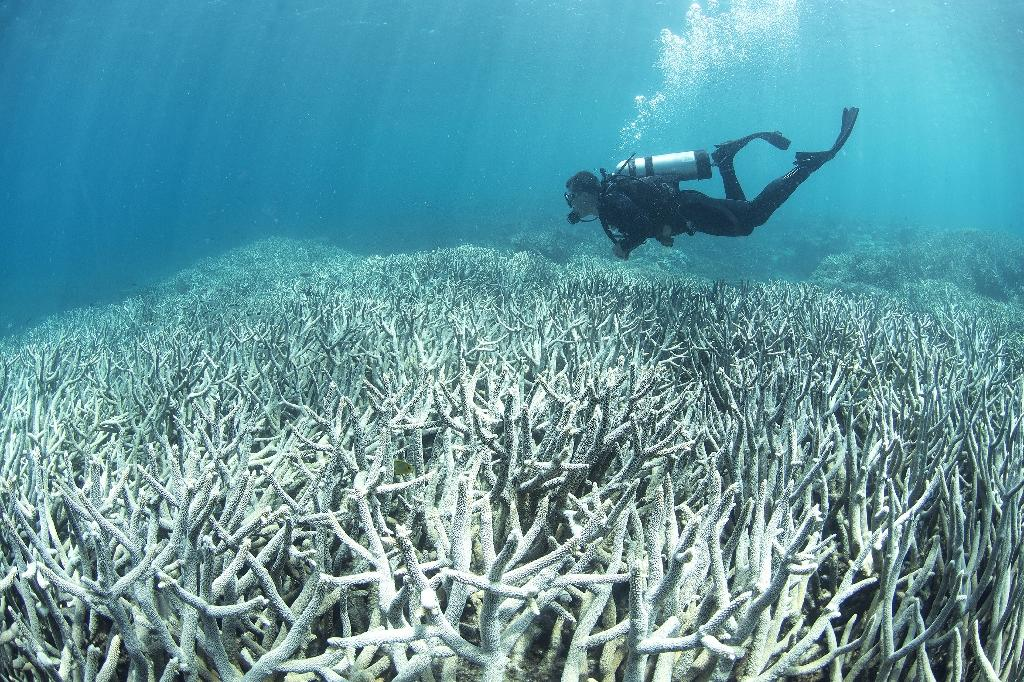 This undated photo released on April 20, 2016 by XL Catlin Seaview Survey shows a diver checking the bleached coral at Heron Island on the Great Barrier Reef (AFP Photo/)