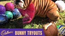 The Easter … Dog? Meet The New Cadbury 'Bunny', an Adorable, Wrinkly Bulldog Named Henri