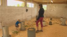Farm families 'drowning' under pandemic pressures plead for child-care help